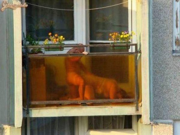 外人さんが昼間っからパコりまくってる青姦セックスのエロ画像 1716
